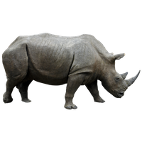 Rhinoceros Transparent PNG Image - Rhinoceros PNG