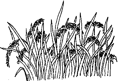 A rice field - Rice Paddy PNG Black And White