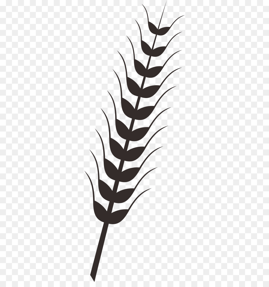 Wheat Rice Drawing Clip art - Rice wheat rice paddy - Rice Paddy PNG Black And White