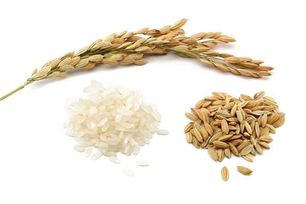 Rice PNG - 27037