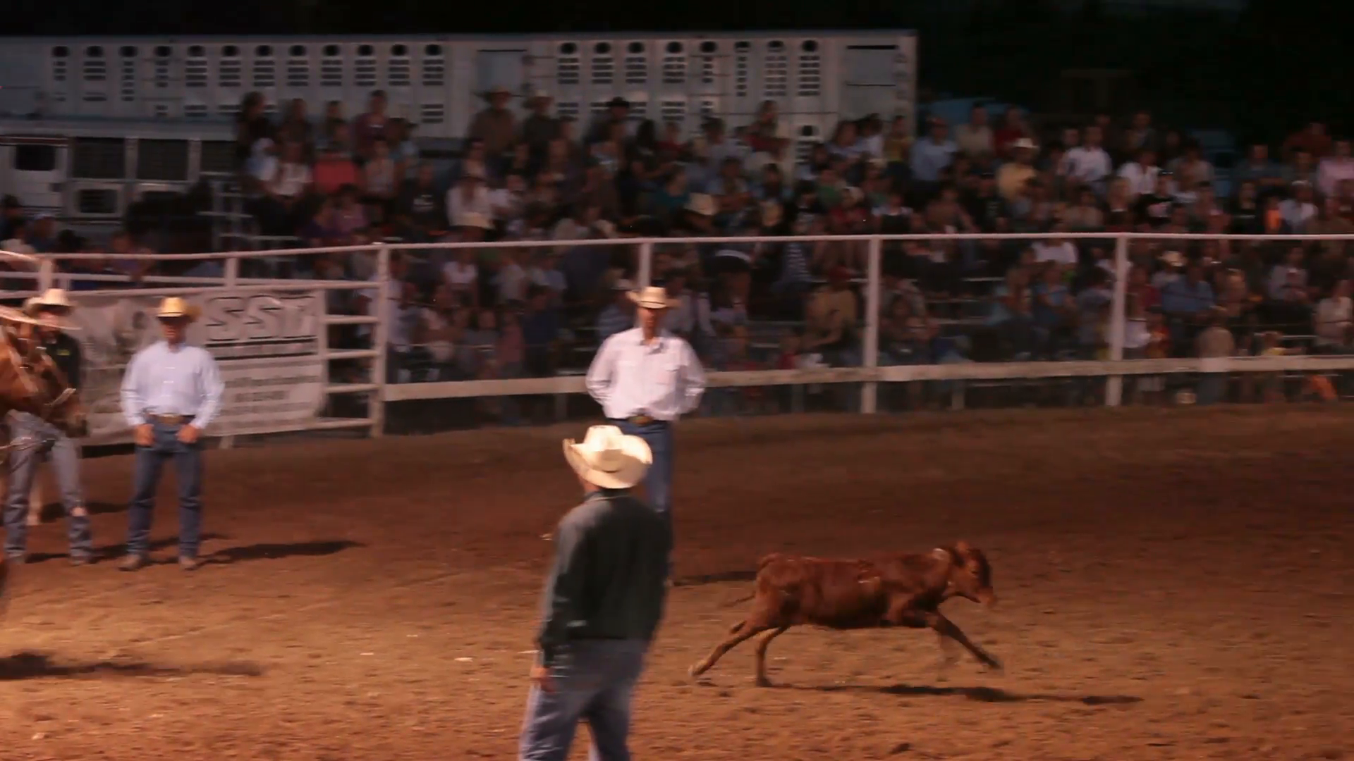 Rodeo calf roping with a young man cowboy on horse back ropes a steer then  hog ties it to win competition. Small county annual rodeo and fair. - Rodeo PNG HD