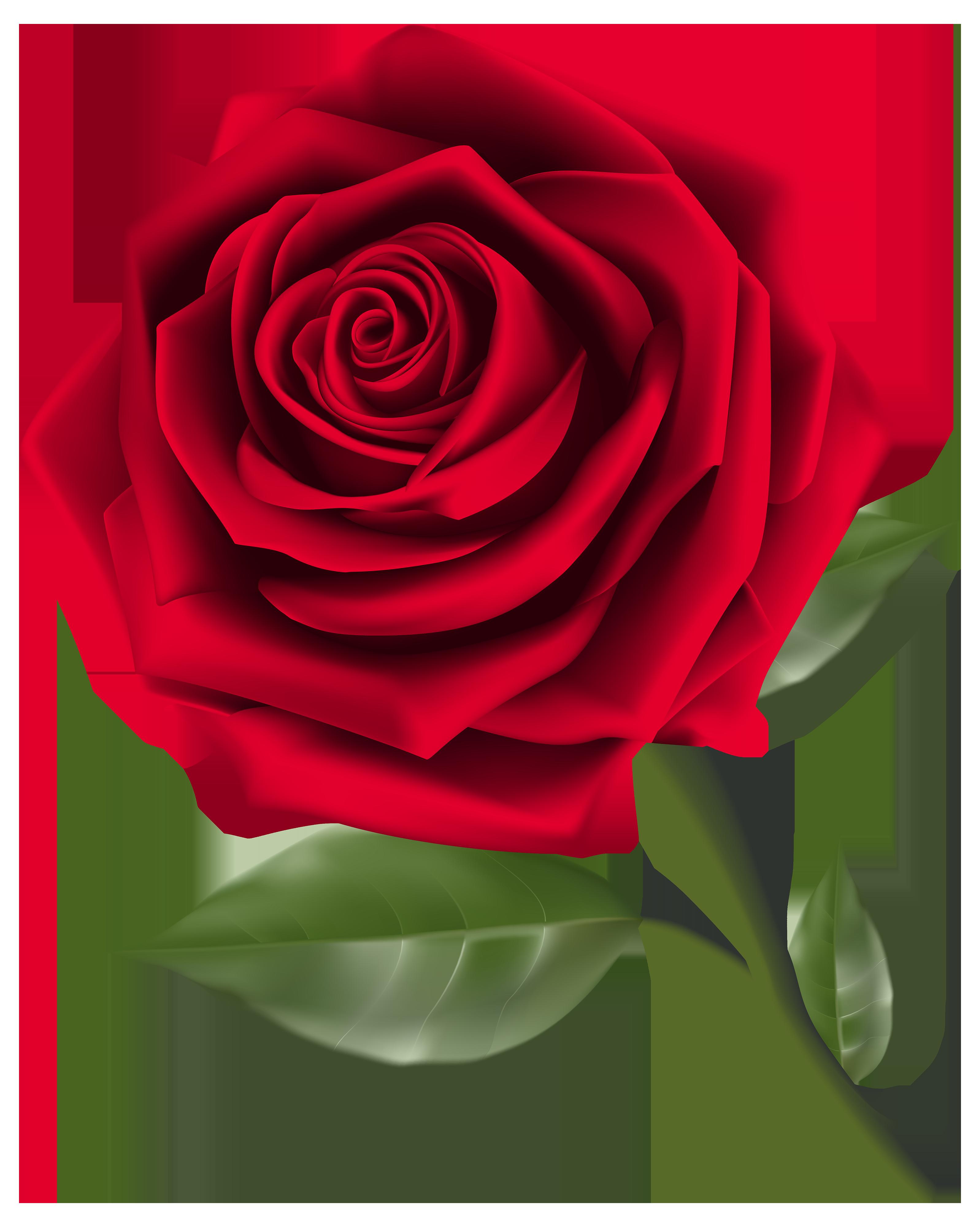 Rose PNG - 12786