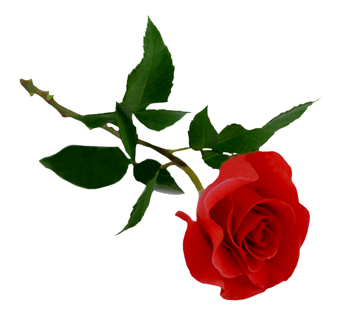 Download PNG image - Rose Png Hd - Rose PNG HD