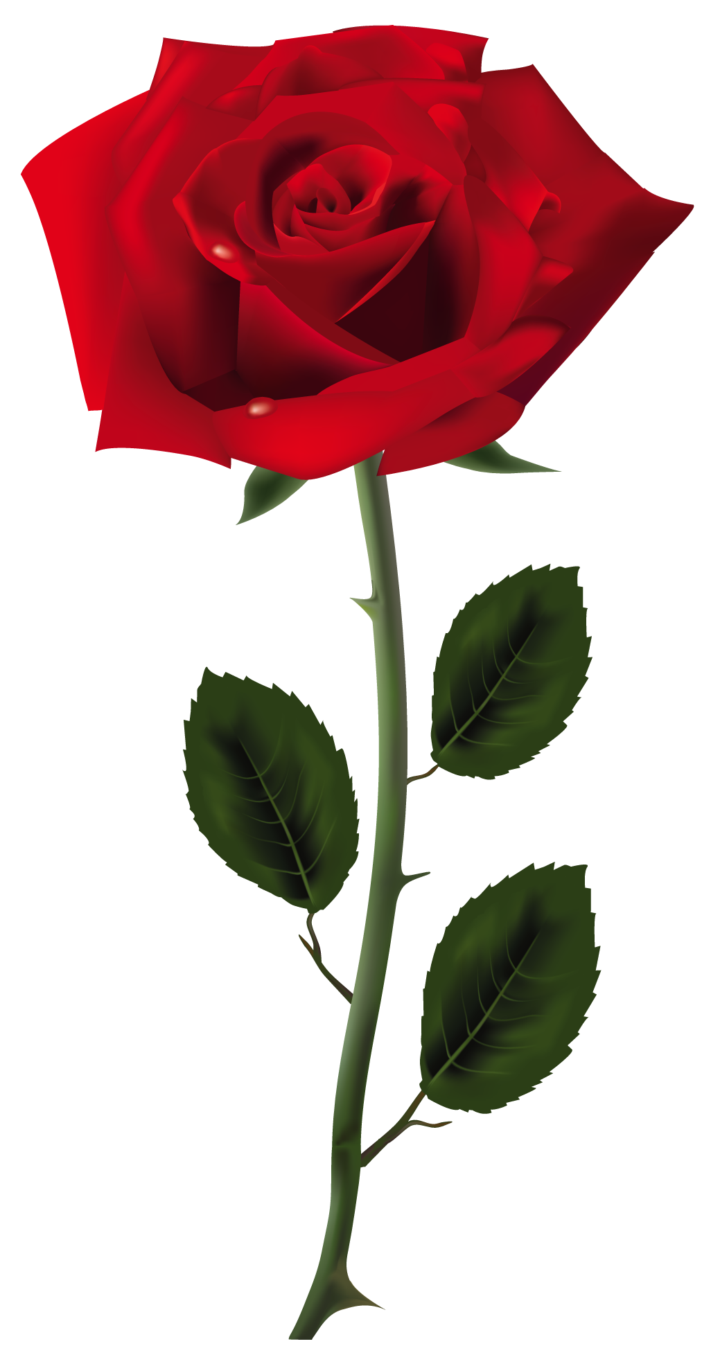 Rose Free Download PNG - Rose PNG HD