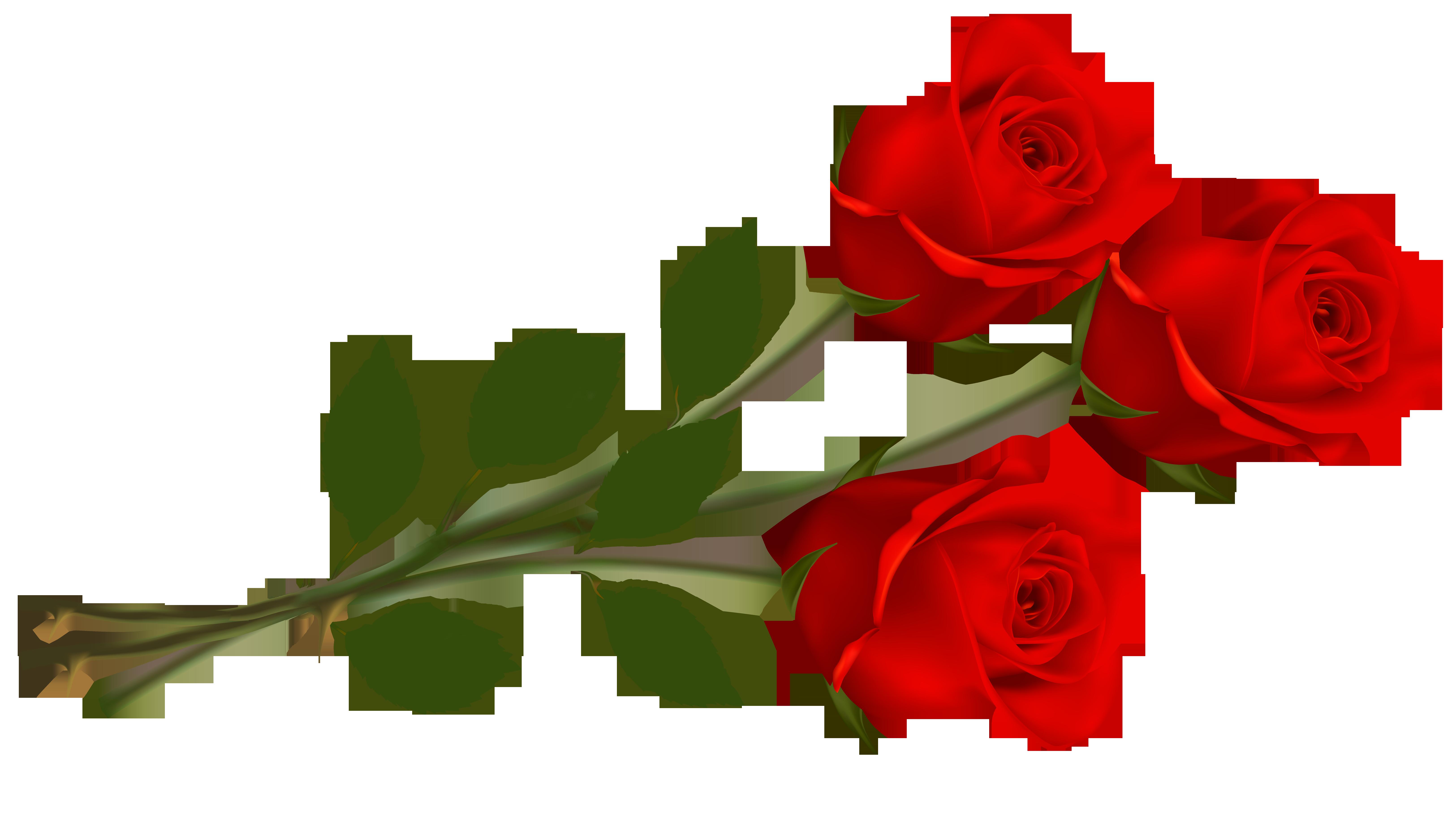 Rose PNG HD - 125294