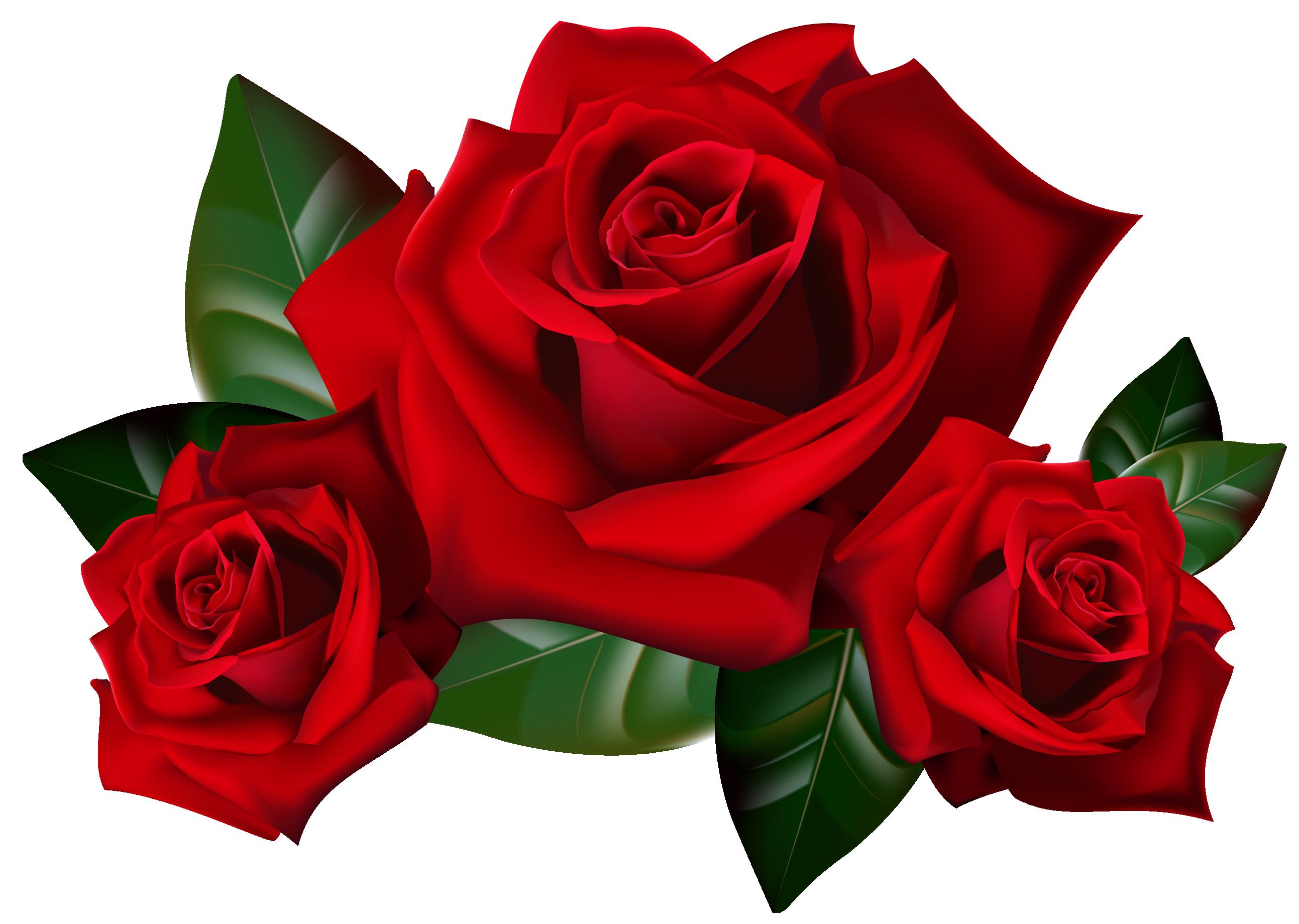 Rose PNG - 12780