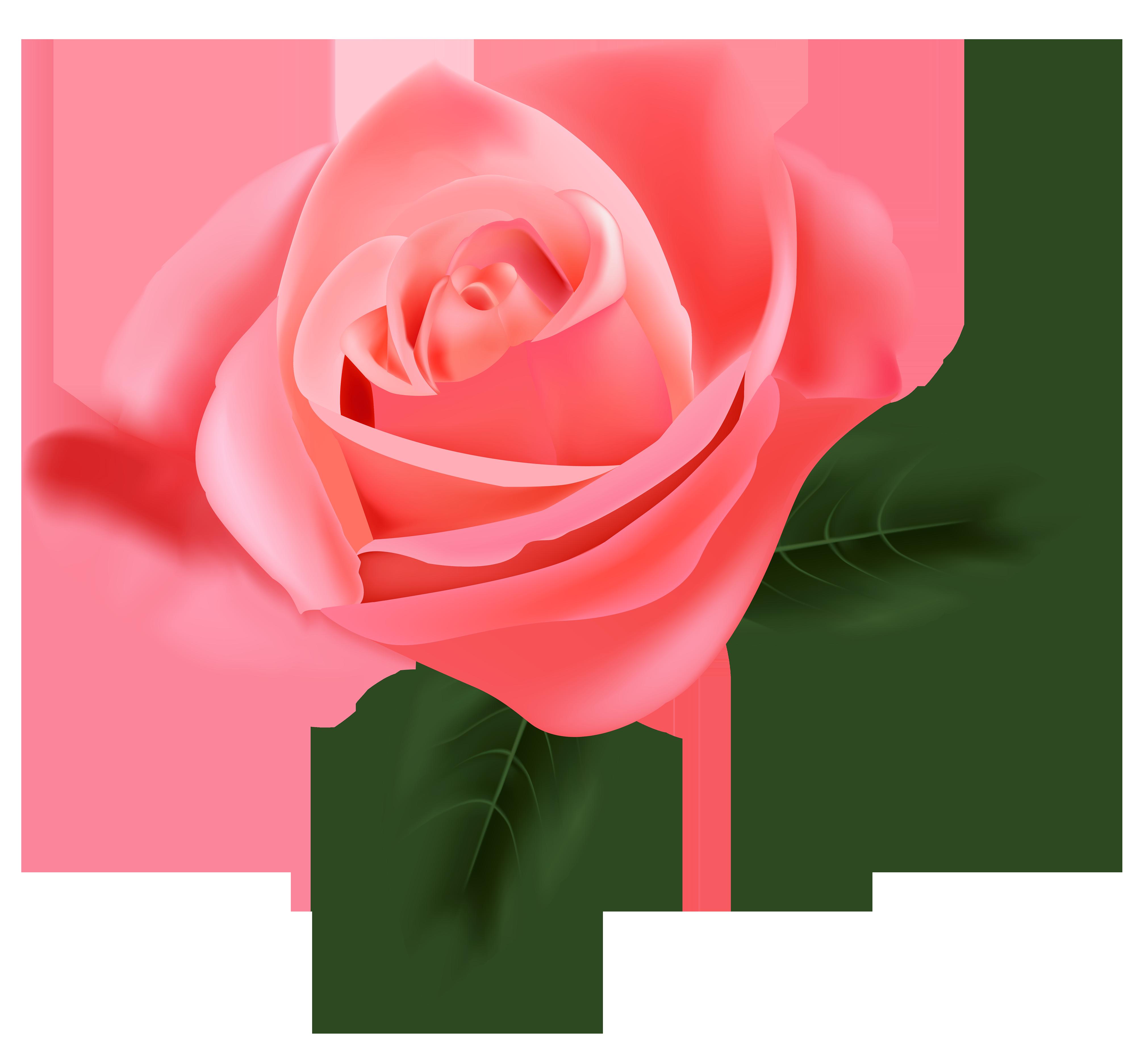 Rose PNG - 12787