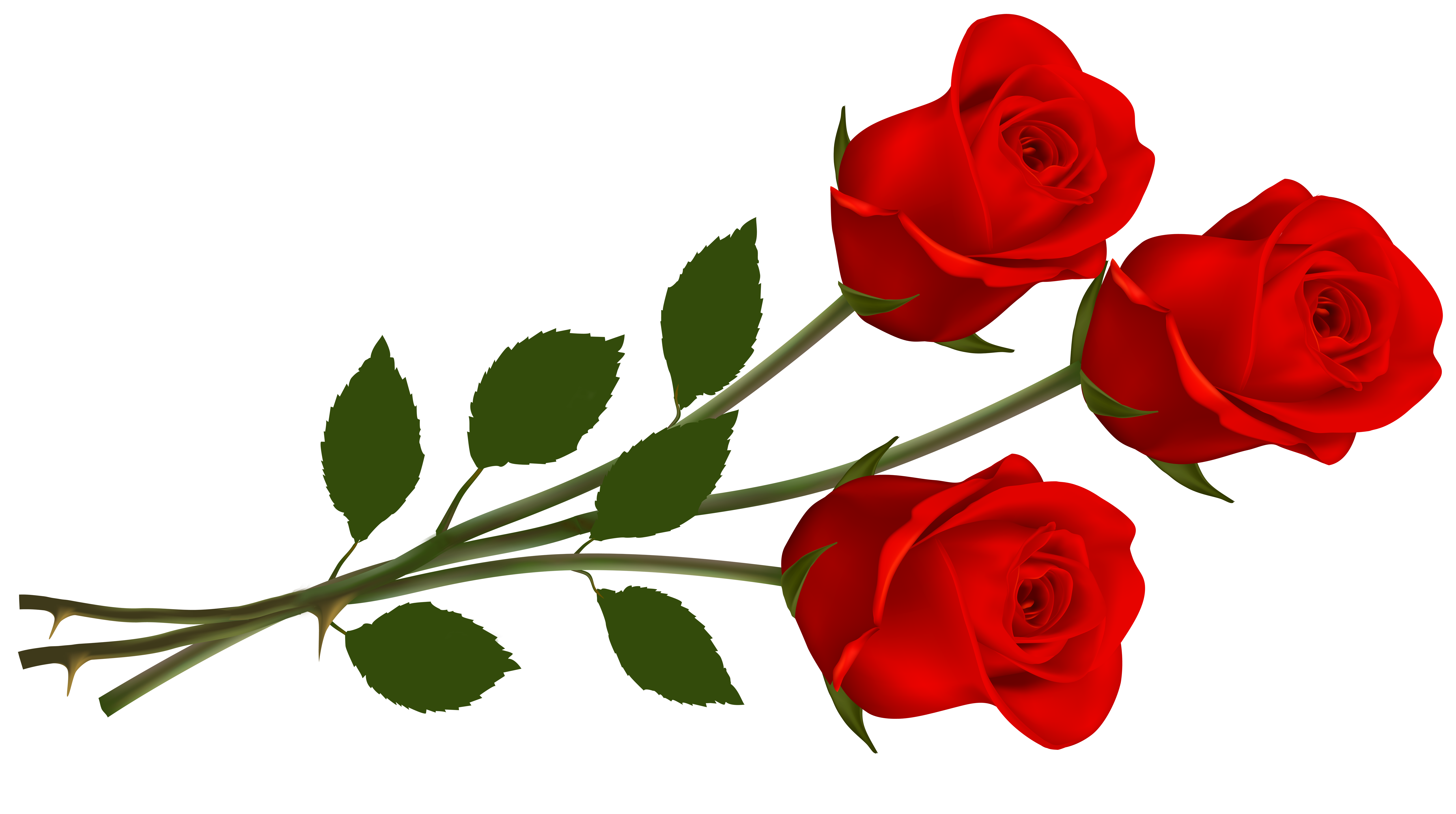 Rose PNG - 12777