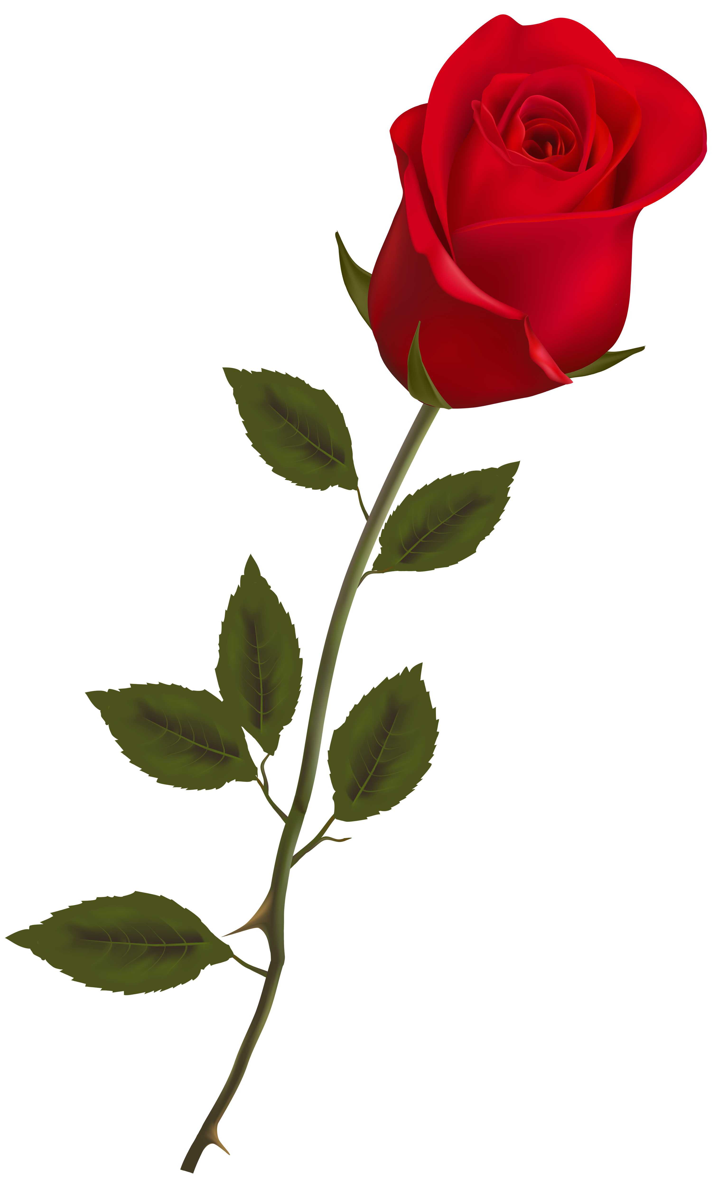 Roses Png Image image #39854 - Rose PNG