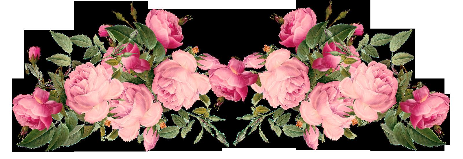 Pink Rose Borders | free pink roses border, vintage style - Flowers Borders  PNG - Rose Vine PNG HD