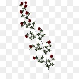 Rose Vine PNG HD - 144665