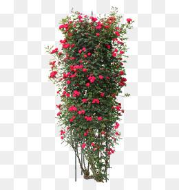 Rose Vine PNG HD - 144676