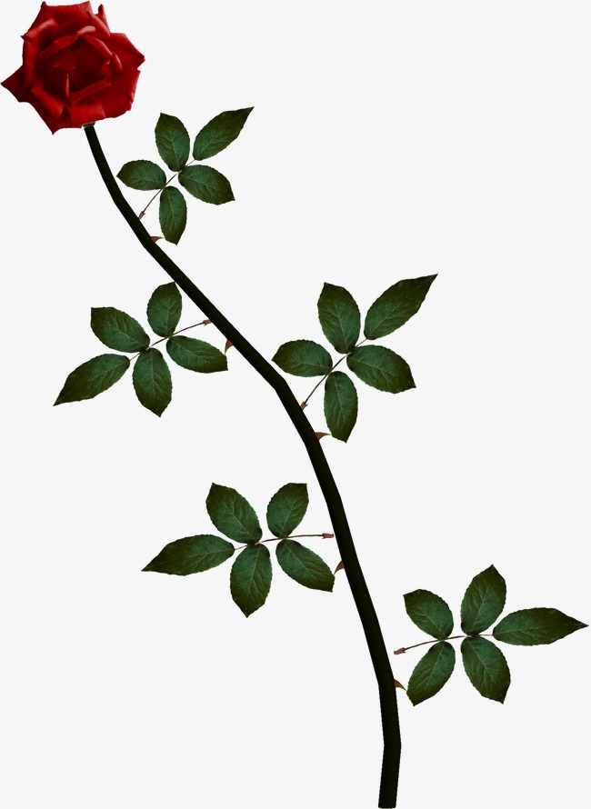 Rose, Rose Vine, Vine PNG Image and Clipart - Rose Vine PNG HD