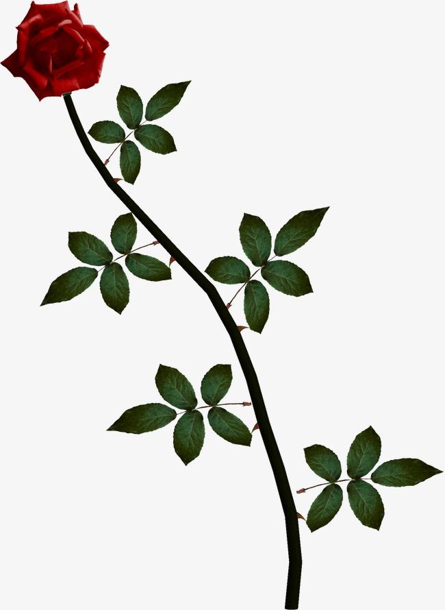 Rose Vine PNG HD - 144681