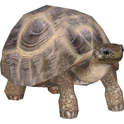 Tortoise PNG - 7218
