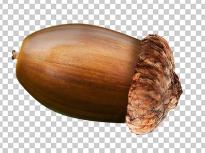 Acorn PNG - 5298