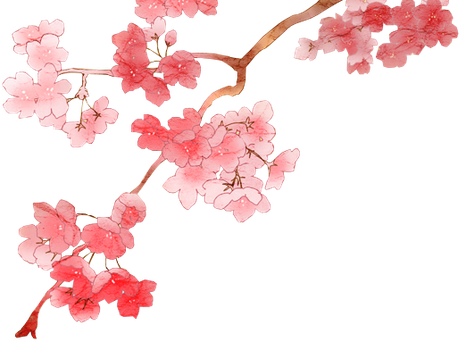 Cherry Blossom PNG 2 by dothenyancat - Sakura Flower PNG HD