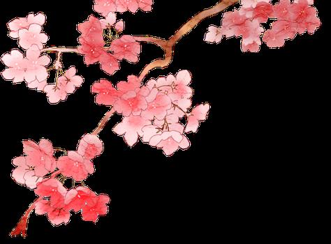 Sakura Flower PNG HD - 121371