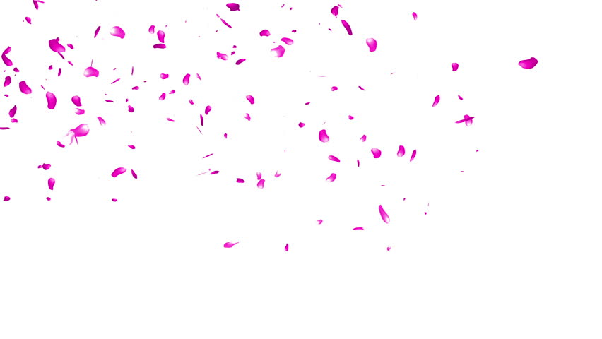 Falling Sakura Petals Cherry Blossoms Animation Stock Footage Video 3482093  | Shutterstock - Sakura Flower PNG HD