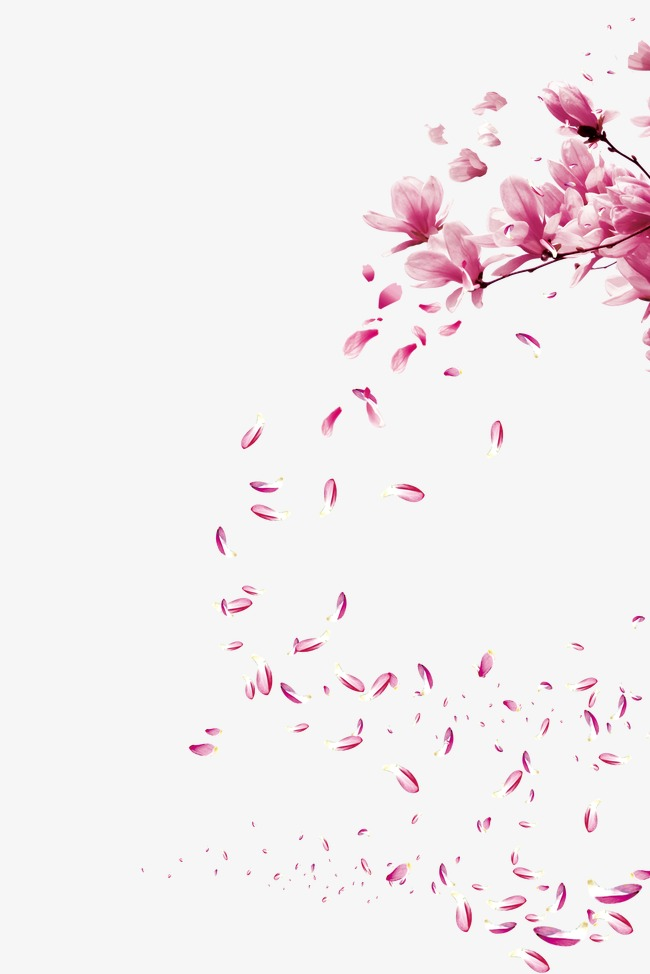 Floating cherry, Cherry Blossoms, Peach Blossom, Romantic PNG and PSD - Sakura Flower PNG HD
