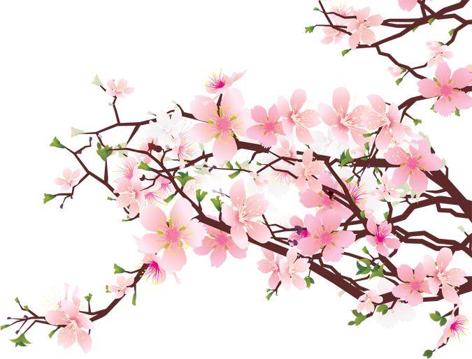 Sakura Flower PNG HD - 121358