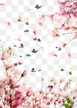 Sakura flowers butterfly, Cherry Blossom Petals, Squid, Butterfly PNG and  PSD - Sakura Flower PNG HD