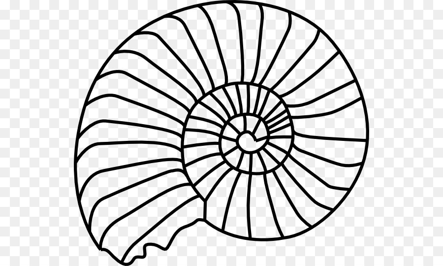 Fossil Ammonites Seashell Clip art - Sand Dollar Clipart - Sand Dollar PNG Black And White
