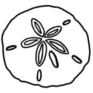 Sand Dollar Image - Sand Dollar PNG Black And White