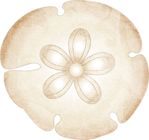 sand dollar png hd transparent sand dollar hd png images pluspng rh pluspng com sand dollar clip art printer paper sand dollar clip art free for commercial use