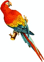 Macaw PNG - 5250