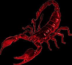 Scorpion PNG - Scorpion HD PNG