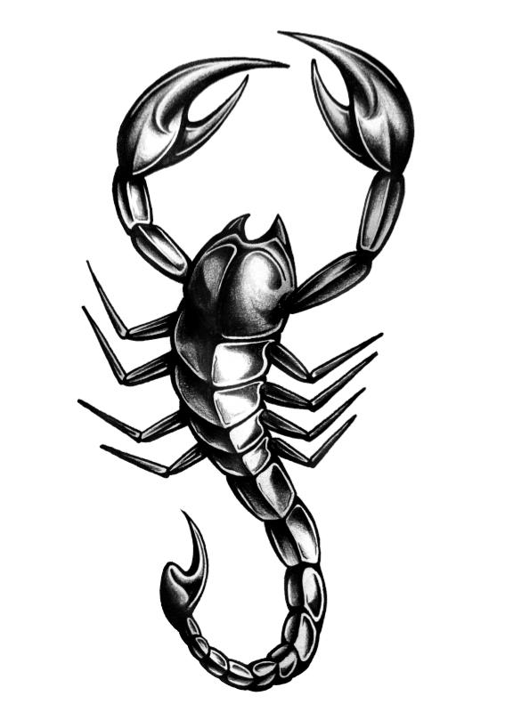 Scorpion Tattoos PNG - 10749