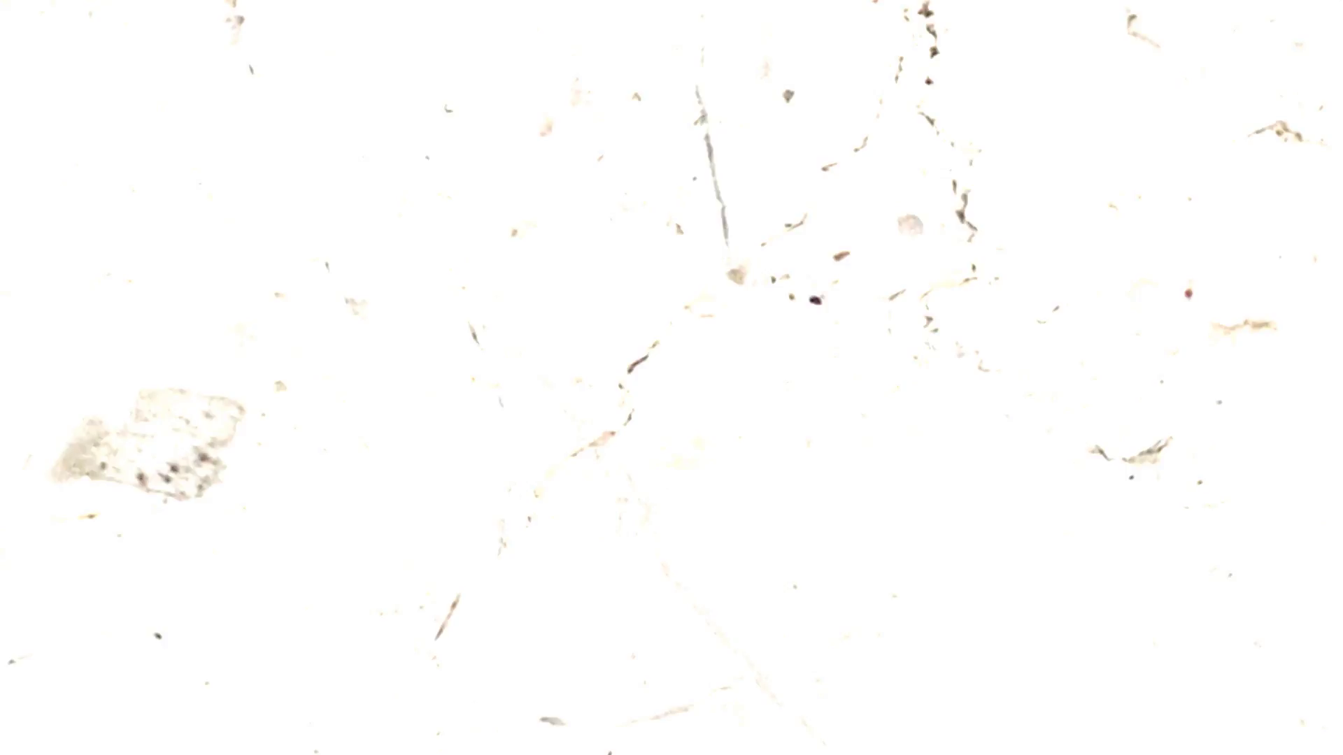 A dirty film texture with a mix of dust specks, scratches, and splotches.  Use the u201cMultiplyu201d blending mode to composite this over your footage to  create a PlusPng.com  - Scratches PNG