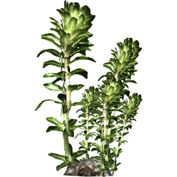 Image - Kelp (HENDRIX).png | ZT2 Download Library Wiki | FANDOM powered by  Wikia - Sea Kelp PNG