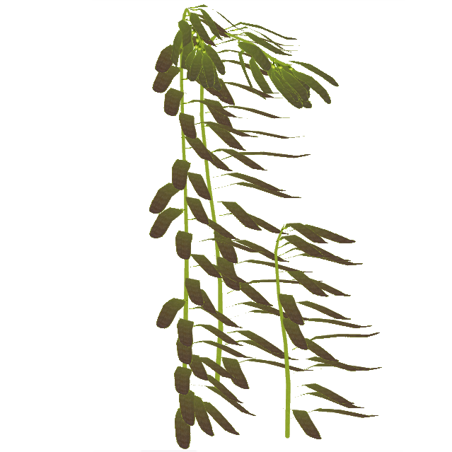 Image - Northern Giant Kelp (Eryel).png | ZT2 Download Library Wiki |  FANDOM powered by Wikia - Sea Kelp PNG