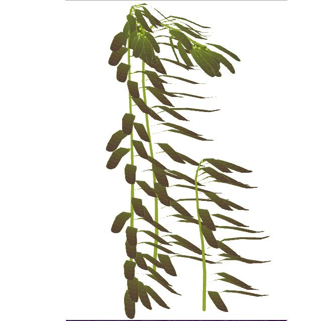 Sea Kelp PNG - 49521