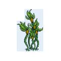 Sea Kelp PNG - 49522