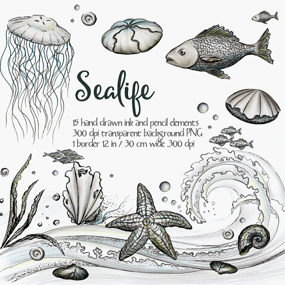 Digital clipart Sea life, ocean life clipart, ink clipart, black and white,  hand painted clipart, fish, seashell, wave, sea strar, jellyfish from PlusPng.com  - Sea Life PNG Black And White