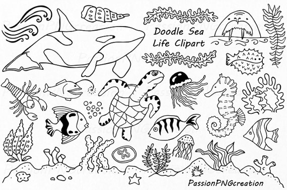 Doodle Marine Life Clipart, Sea Life clip art, Ocean life, PNG, EPS, fish,  vector, Under the Sea, For Personal and Commercial use from  PassionPNGcreation on PlusPng.com  - Sea Life PNG Black And White