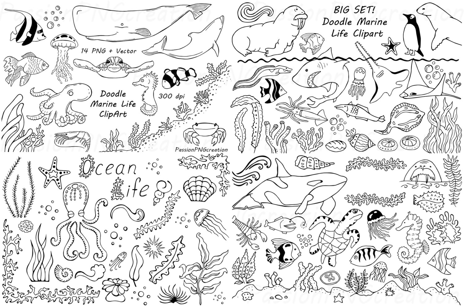 ????zoom - Sea Life PNG Black And White