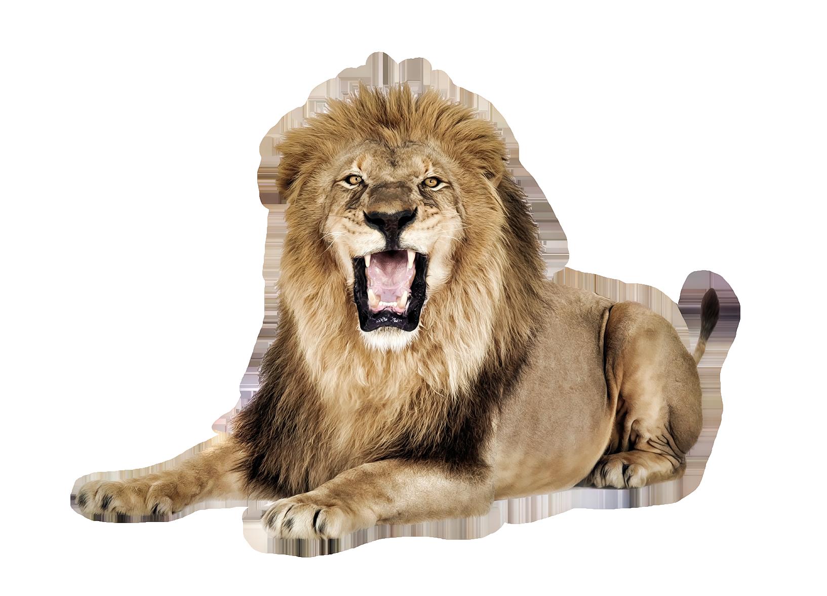 Sea Lion PNG HD - 127569