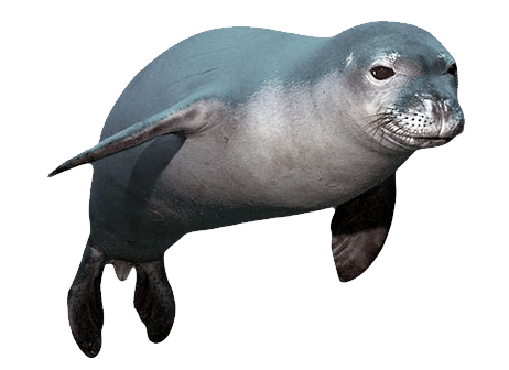 Sea Lion PNG HD