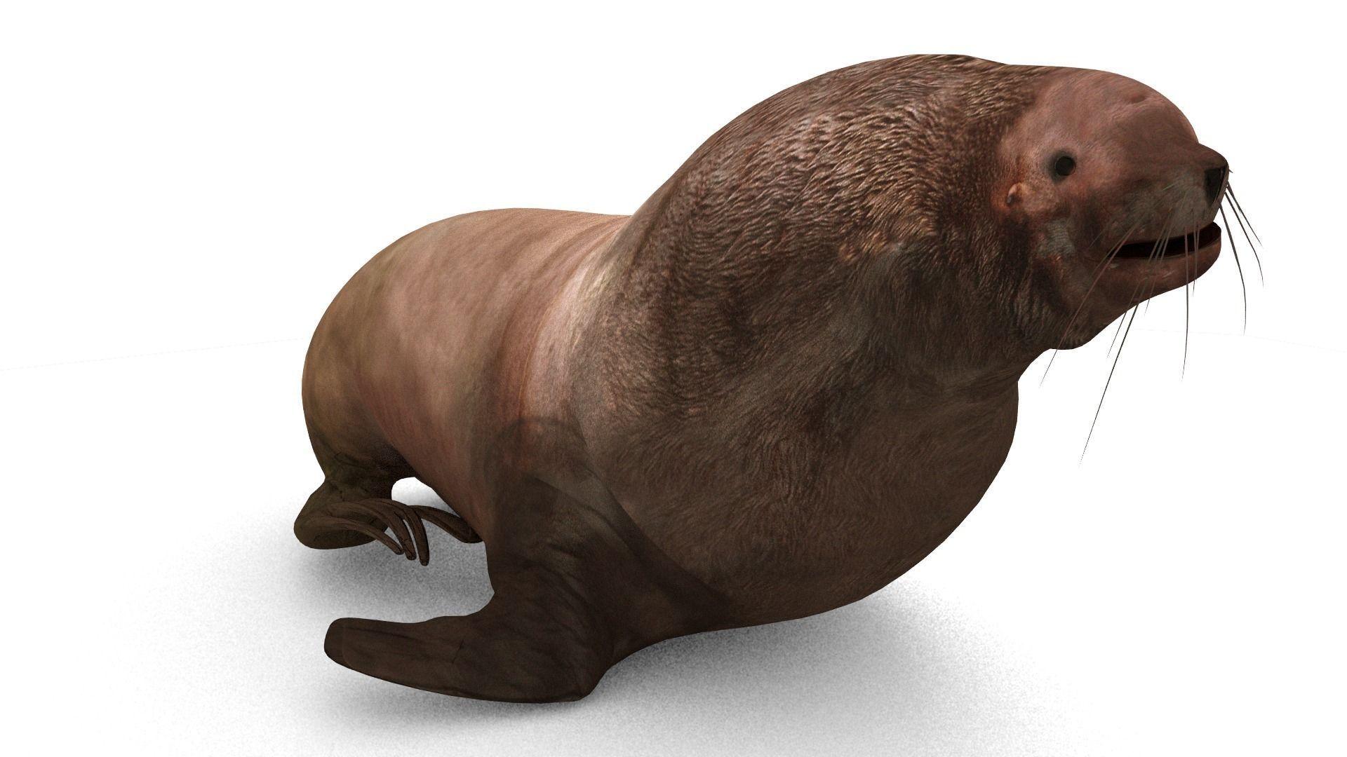 Sea Lion PNG HD - 127564