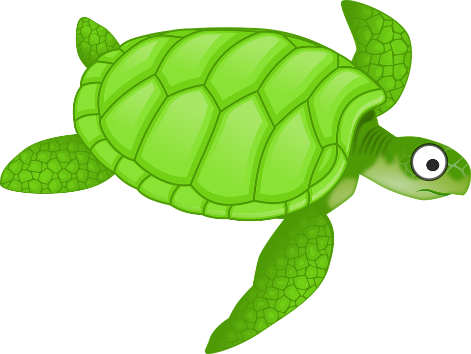 cartoon green sea turtle - Sea Turtle Cartoon PNG