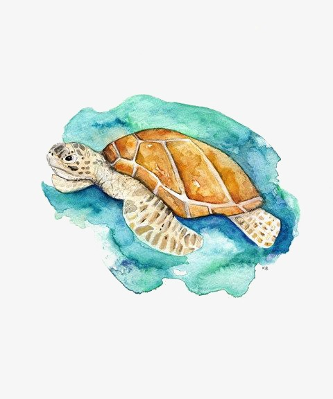 Sea turtle, Painted Turtle, C