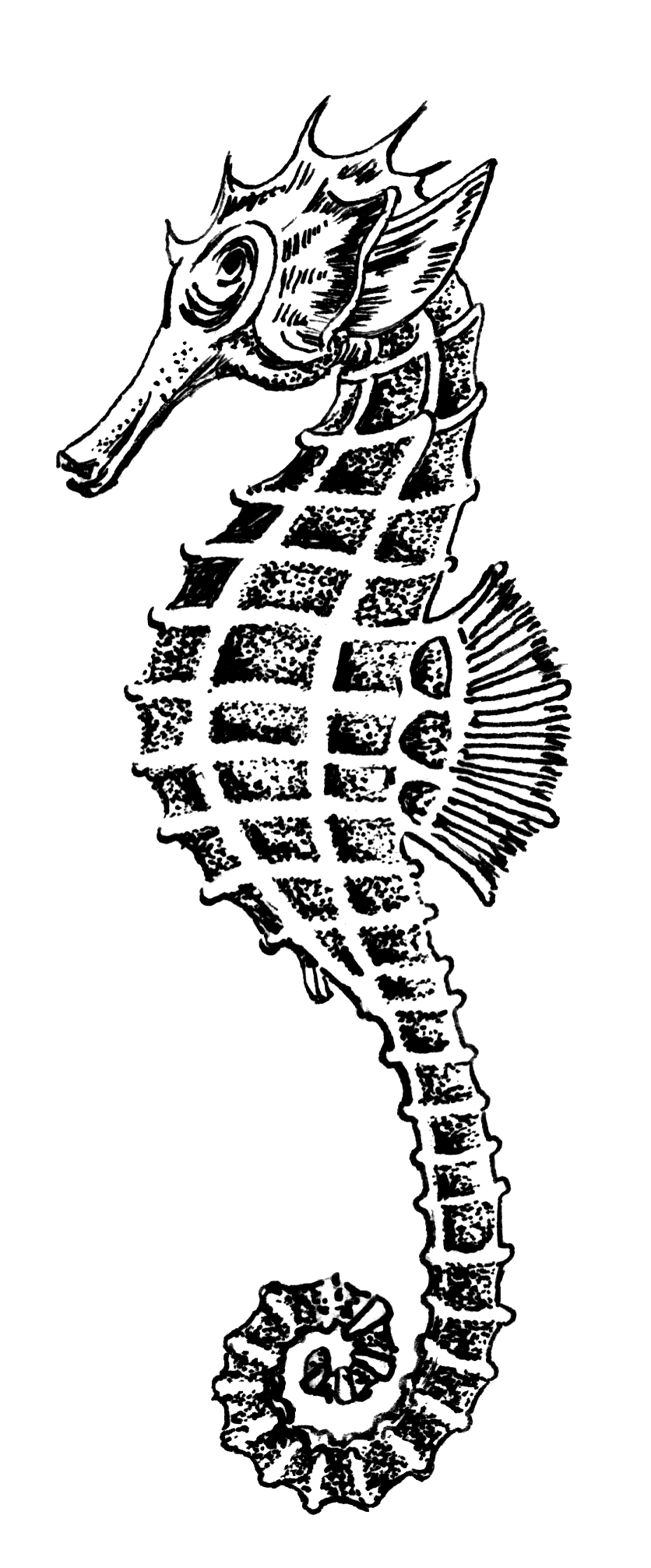 File:Sea Horse 1 PSF S-820006.png - Seahorse PNG