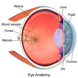 Sense Of Sight PNG - 84895