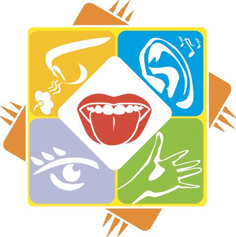 Five Senses: Facts - Sense Organs PNG