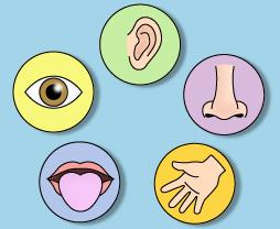 five senses preschool theme clipart - Sense Organs PNG