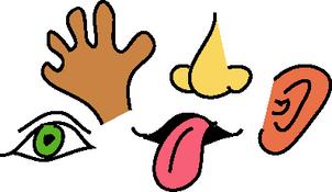 my_ecoach - Sense Organs PNG